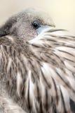 Młody flaminga portret zdjęcie stock