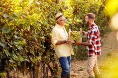 Młody gronowy ojciec i syn pracuje przy winnicą Obrazy Stock