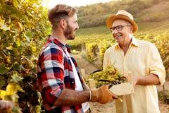 Młody gronowy uśmiechnięty ojciec i syn pracuje przy winnicą obrazy stock