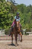 Młody horsewoman na brown koniu Obrazy Stock
