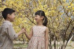 Młody i uśmiechnięty brat pokazuje each inny kolorów żółtych okwitnięcia w parku w wiośnie Obraz Royalty Free