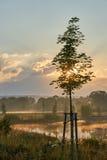 Młody klonowy drzewo podczas gdy wschód słońca w mgłowej naturze Żywi kolory z dramatycznymi chmurami Wilhelminenaue, Bayreuth, N Zdjęcia Stock