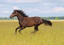 Młody koń Fotografia Royalty Free
