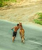 Młody koń z jego trenerem zdjęcia stock