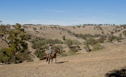 Młody koński instruktor lub cattleman jedzie zwierzęcia w butach kowbojskiego kapeluszu i jeźdza obraz royalty free