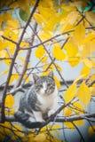 Młody kot na gałąź zdjęcia royalty free