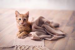 Młody kot odpoczywa na koc obrazy stock