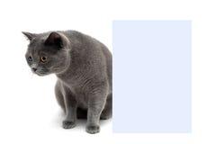 Młody kot siedzi blisko sztandaru na białym tle Obraz Stock