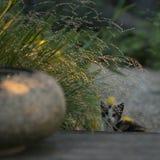 Młody kot w ogrodowej wodzie pitnej od kamienia obraz stock