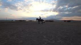 Młody kowboj z koniami zbiory wideo