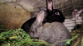 Młody królik w klatce zbiory