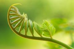 Młody krótkopęd roślina Obraz Stock