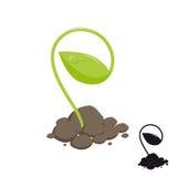 Młody krótkopęd rośliny r w ziemi Obraz Stock