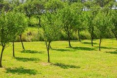 Młody lasowy pojęcie ekologia obrazy stock