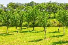 Młody lasowy pojęcie ekologia fotografia royalty free