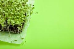 Młody mikro zielenieje na zielonym tle, pusta przestrzeń dla teksta obraz stock