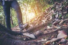 Młody modnisia mężczyzna odprowadzenie na ulicznym lesie, mężczyzna na buta footwea obrazy stock