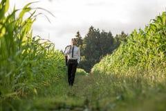 Młody pomyślny biznesmena odprowadzenie między dwa kukurydzanymi polami zdjęcia royalty free