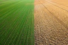 Młody pszeniczny sadzonkowy dorośnięcie w śródpolnym widok z lotu ptaka Zdjęcie Stock