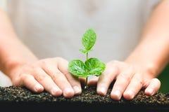 Młody ręki rośliny kawowego drzewa save światu pojęcie Zdjęcie Royalty Free