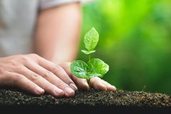 Młody ręki rośliny kawowego drzewa save światu pojęcie Fotografia Royalty Free