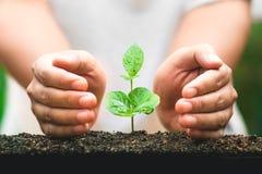 Młody ręki rośliny kawowego drzewa save światu pojęcie Fotografia Stock