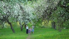 Młody rodzinny odprowadzenie przez kwitnących drzew w wiosna parku ?adunku elektrostatycznego strza? zdjęcie wideo