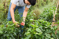Młody rolnik obrazy royalty free
