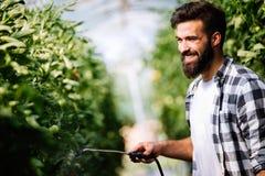 Młody rolnik ochrania jego rośliny z substancjami chemicznymi zdjęcie royalty free
