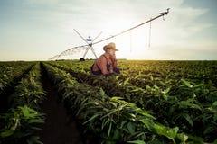 Młody rolnik w pieprzowych polach zdjęcia stock