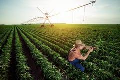Młody rolnik w pieprzowych polach obraz stock