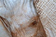 Młody słoń z matką Szczegół duży zwierzę Przyrody scena od natury Sztuka widok na naturze Obrazy Royalty Free