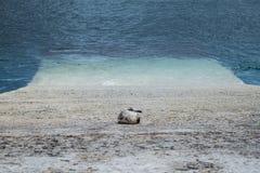 Młody seagull odpoczywa na schronienie rampie zdjęcia royalty free