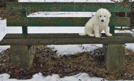 Młody szczeniaka obsiadanie na ławce w zimie Zdjęcia Stock