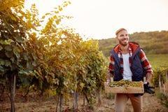 Młody uśmiechnięty mężczyzna podnosi białych winogrona zdjęcie royalty free