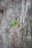 Młody zielonej rośliny dorośnięcie na drzewie Zdjęcia Stock