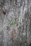Młody zielonej rośliny dorośnięcie na dużym drzewie Zdjęcia Stock