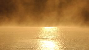 Młodych człowieków pływania czołgać się w mglistym złotym jeziorze w mo zbiory