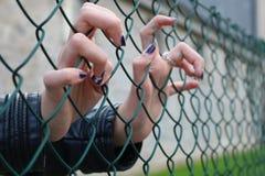 Młodych dziewczyn ręki przez zielonej stali sieci Zdjęcie Stock