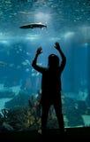 Młodych dziewczyn spojrzenia przy ryba z ona ręki up w Lisbon aqu Obraz Royalty Free