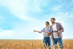 Młodzi agronomowie w zbożowym polu zdjęcia royalty free