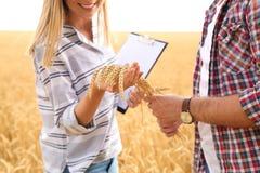 Młodzi agronomowie w zbożowym polu zdjęcia stock