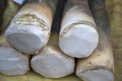 Młodzi bambusowi krótkopędy Zdjęcia Stock