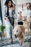 Młodzi bizneswomany bawić się z golden retriever psem w nowożytnym biurze fotografia royalty free