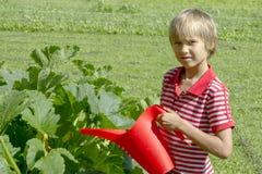 Młodzi chłopiec podlewania warzywa w rodzinnym jarzynowym ogródzie Zdrowy, uprawiający ogródek, stylu życia pojęcie Zdjęcia Royalty Free