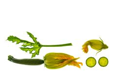 Młodzi courgettes z liściem i kwiatami na białym tle Obrazy Royalty Free
