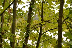 Młodzi drzewa i liście fotografia royalty free