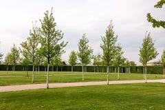 Młodzi drzewa w parku fotografia stock
