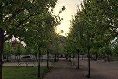 Młodzi drzewa w promieniach położenia słońce obrazy royalty free