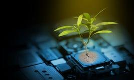 Młodzi drzewo zieleni liście r na komputerowego obwodu mainboard układzie scalonym zdjęcie stock